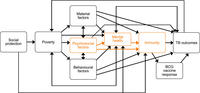 Conceptual framework depicts several pathways through which social protection interventions may affect TB outcomes