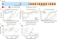 Study design diagram and monitoring of TB infecvtion by IFNy release after repeated ultra-low dose expose to M.tb